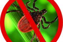 «Горячая линия» по вопросам профилактики «клещевых» инфекций.